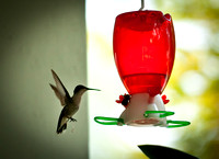 Hummingbirds-2